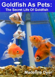 Goldfish As Pets: The Secret Life Of Goldfish